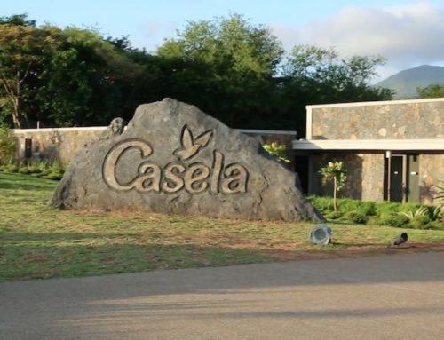 Casela
